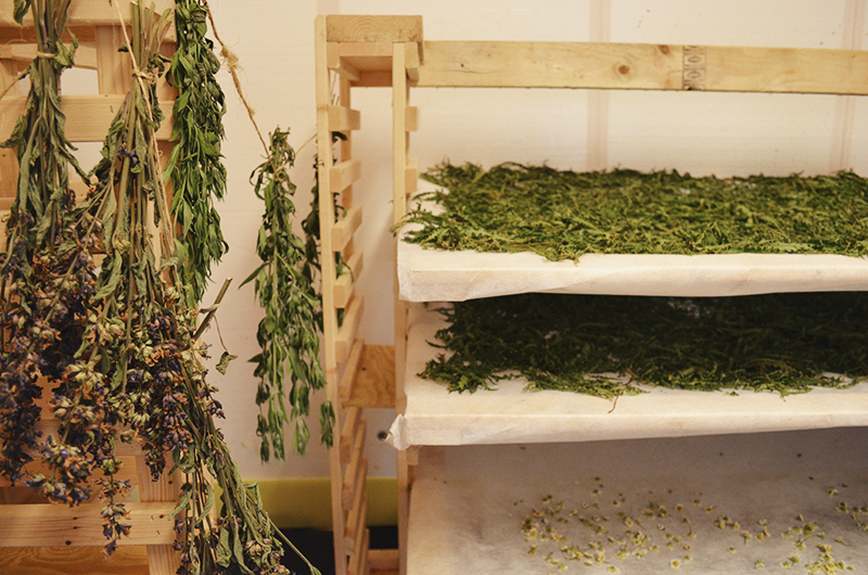 dried herbs used in Urban Farm Fermentory